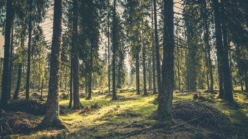 O plimbare prin padure - psihotest ce dezvaluie relatia dintre subconstientul si constientul tau