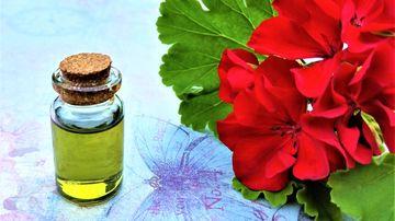 Uleiul esential de geranium (muscata) - beneficii si proprietati