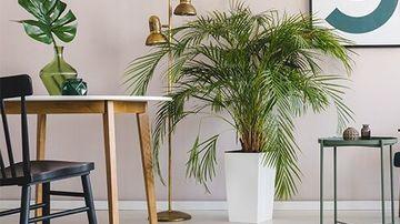 10 plante de apartament care imbunatatesc sanatatea si starea de bine