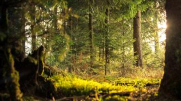 Ce spune stiinta despre efectele timpului petrecut in natura?