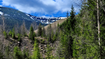 Munții Călimani: regatul sălbatic al pădurilor