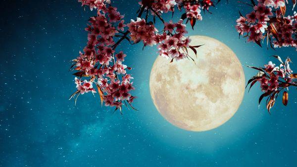 Planul de detoxifiere conform fazelor Lunii